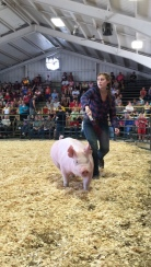 My cousin showing her market hog at the Fayette County Fairgrounds